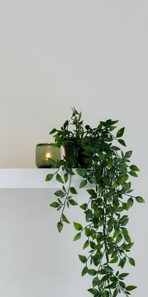 Maison et aromathérapie